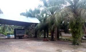 Kondisi RAM (penampungan TBS sawit) di desa Air Hitam nampak sepi, petani tidak memanen sawitnya karena biaya operasional panen tidak sebanding dengan harga jual.